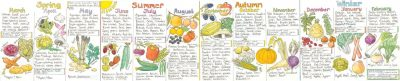 Liz Cook Seasonal UK Fruit and Vegetable Chart
