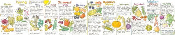 Liz Cook Seasonal UK Fruit and Vegetable Chart