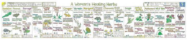 Liz Cook Woman's Healing Herbs Chart
